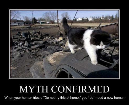 "MYTH CONFIRMED When your human tries a ""Do not try this at home,"" you *do* need a new human"