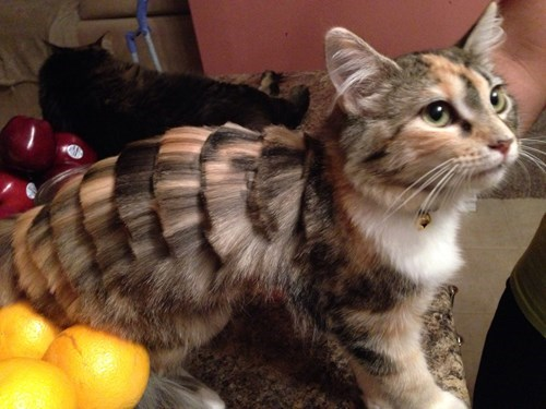 fur poorly dressed haircut Cats - 8319398912