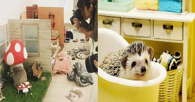 tiny photo studio small pets cute miniature - 8319749