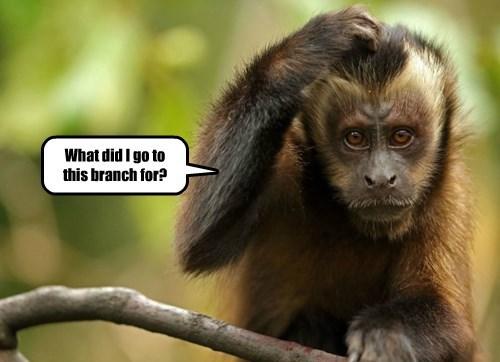 memory senior monkey - 8319878144