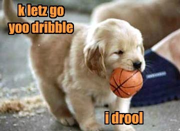 puppy,drool,basketball