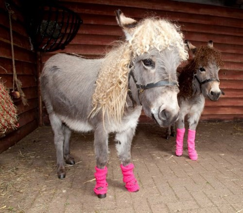 the eighties poorly dressed 80s leg warmers animals - 8320051968