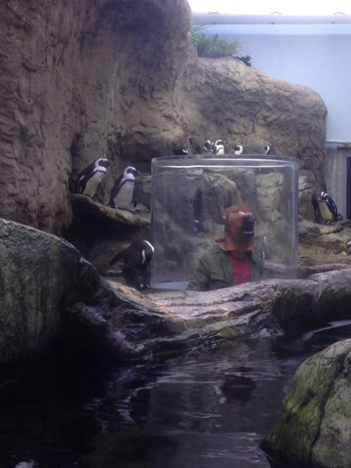penguins,horse masks,zoo