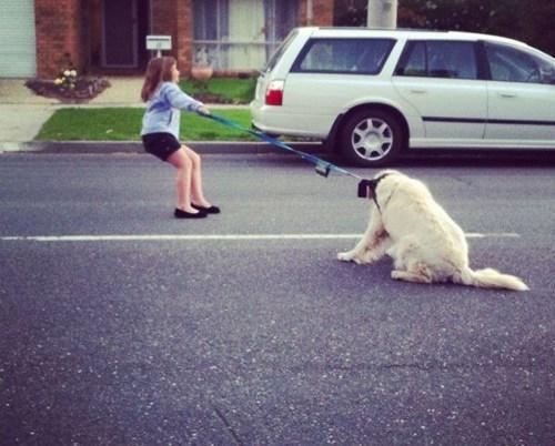dogs leash kids parenting - 8320183040