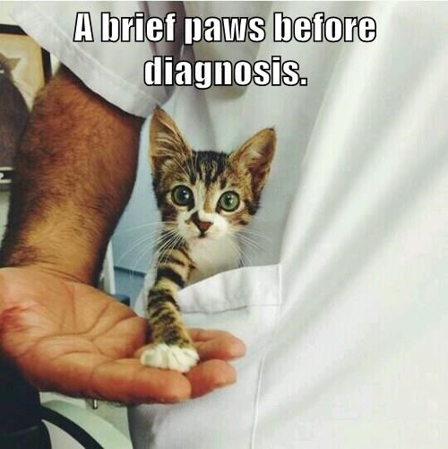 A brief paws before diagnosis.