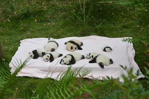 panda-600 cute-10438 picnic-80 - 8320442624