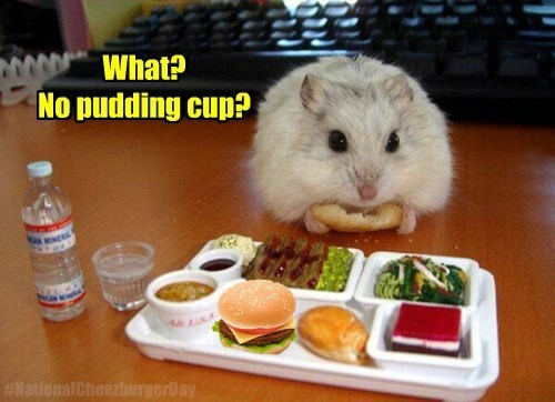 tiny,epic meal time,hamster