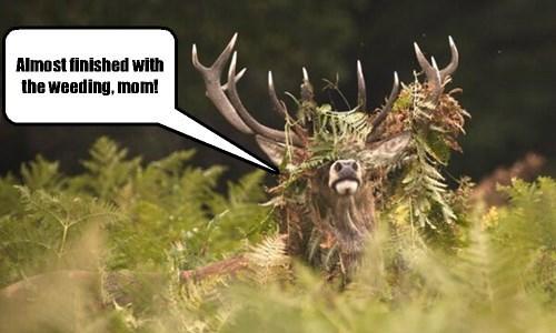antlers,deer,chores