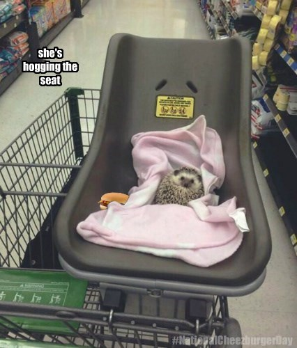 hedgehog,seat,squee