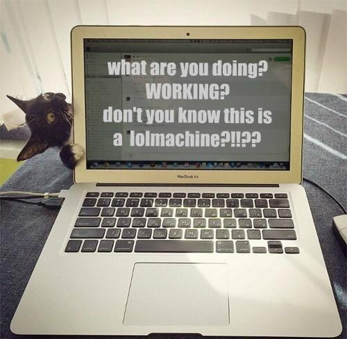 basement cat cumpter Cats - 8320927488
