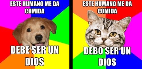 gatos bromas perros Memes animales - 8320932608