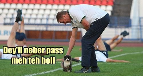 soccer Cats coach - 8320987904