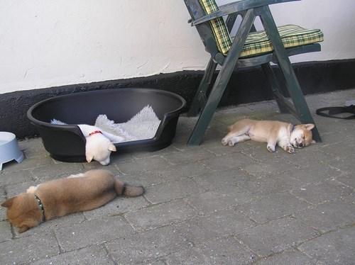 cute-10441,puppies-1397,sleeping-2312,dogs-15149