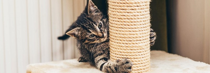 tips scratching post cat owners Cats - 8321029