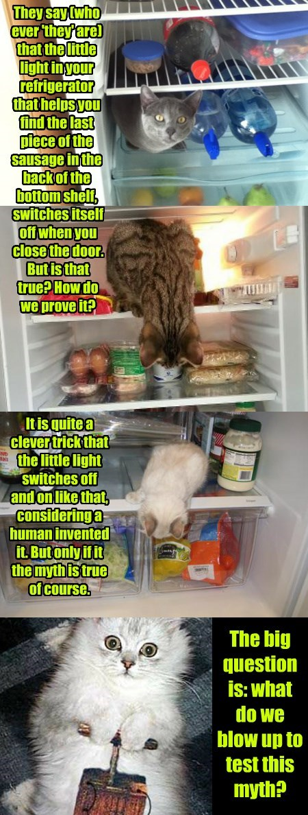 Cat - They say(who ever 'they'are) that the little light in your refrigerator that helpsyou find the last piece of the sausage inthe back of the bottom shelf, Switchesitself off when you close the door. Butis that true?How do we prove it? ПИ Itisquitea clevertrick that the little light Switches off and on like that, considering a human invented it.But only if it the mythistrue of course. The big question is: what do we blow up to test this myth?