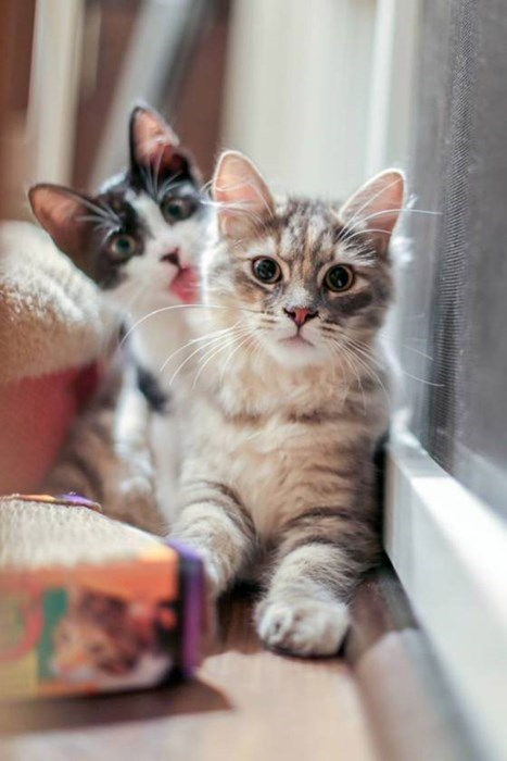 cats-13429 cute-10443 photobomb-2765 kitten-4117 - 8321067264