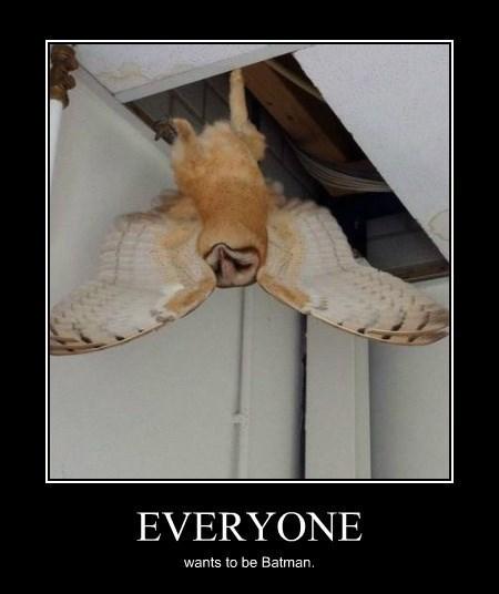 cute owls batman funny - 8321221120