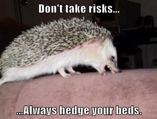 advice animals bite hedgehog - 8321238528