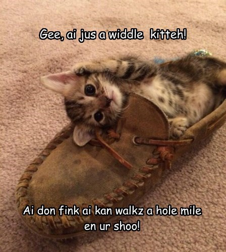 Gee, ai jus a widdle kitteh! Ai don fink ai kan walkz a hole mile en ur shoo!