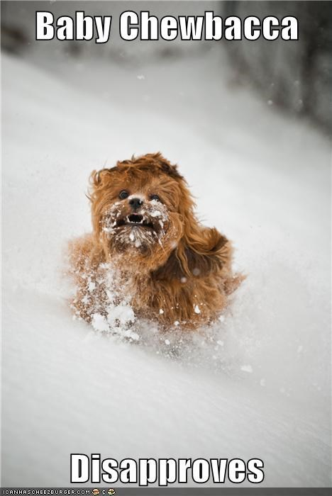 dogs star wars chewbacca