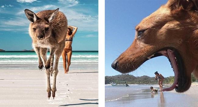 animal photos amazing photos animals - 8321797