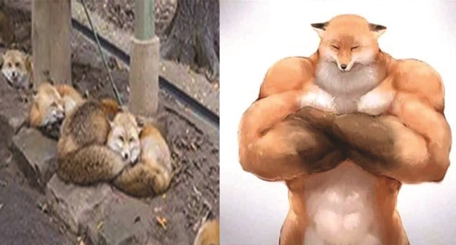 animals drawn as buff and swole and now we can't unsee it