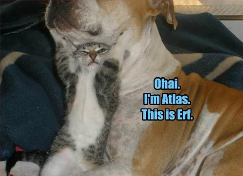 dogs mythology Cats - 8322148608