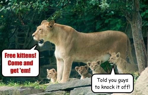 lions,kitten,Cats