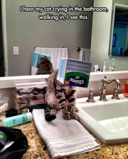 boxes if i fits i sits Cats - 8322230528