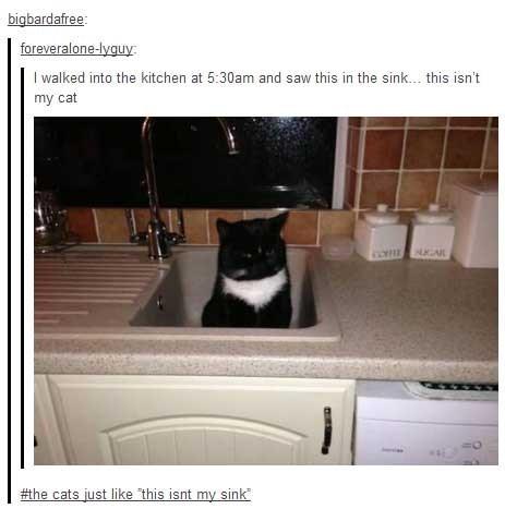 if i fits i sits sink Cats