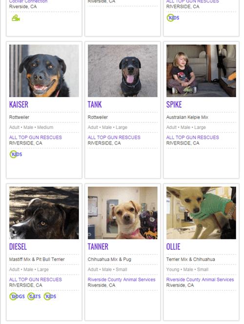 adoption,dogs,parenting