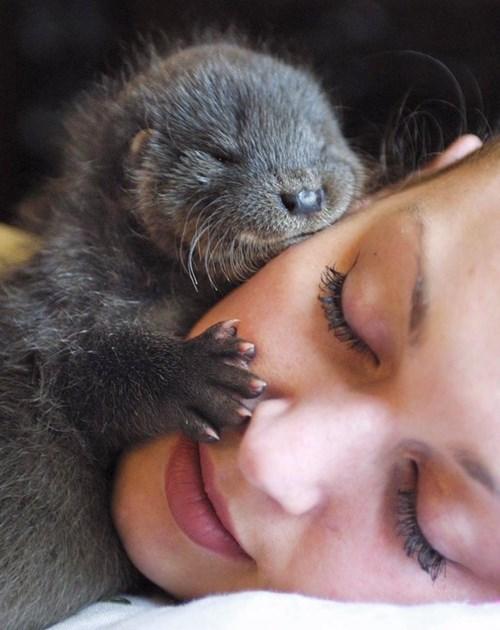 cute otter - 8322311168
