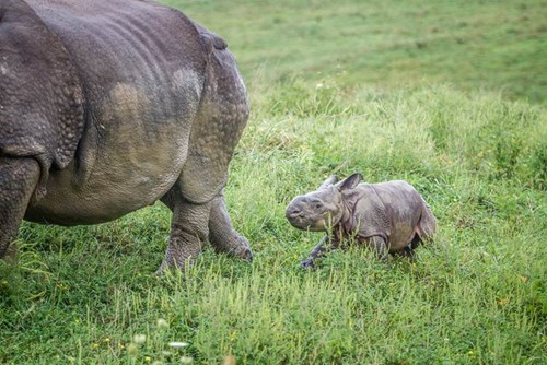 cute-10451 rhino-73 - 8322312192