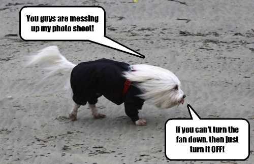 dogs hurricane Photo maltese - 8322475264