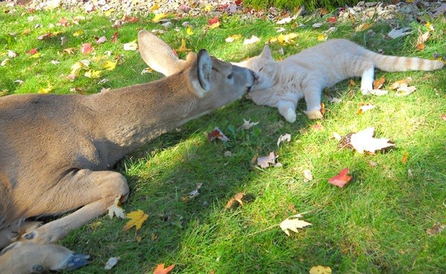 friendship,friends,deer,sweet,species,Cats,animals