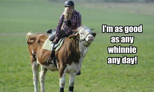 cows horses ride - 8322719232