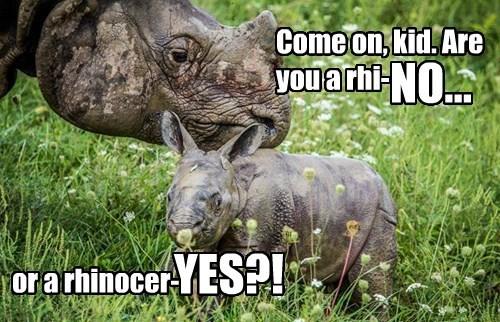 baby animals rhino - 8322730240