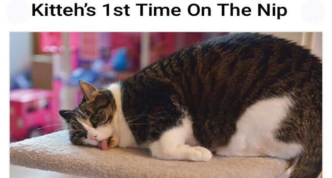 catnip lol funny cats Cats funny - 8322821