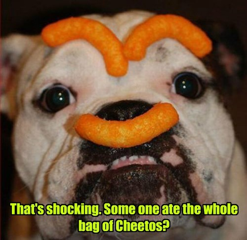 Cheezburger Image 8322987264