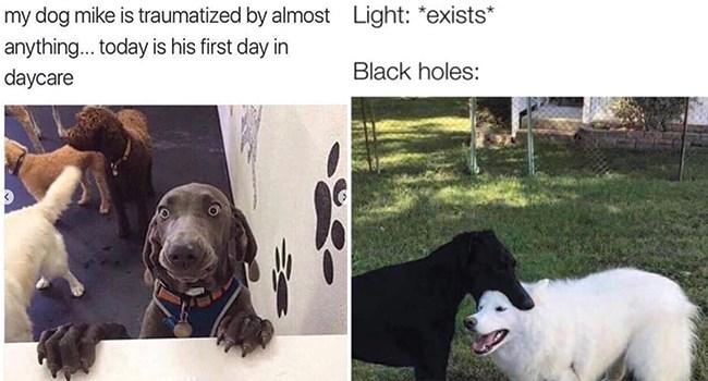 dogs funny dog memes funny memes doggo doggo memes funny - 8323077