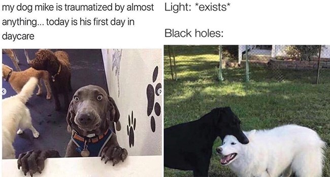 Doggo Memes | my dog mike is traumatized by almost anything today is his first day daycare | Light exists Black holes: