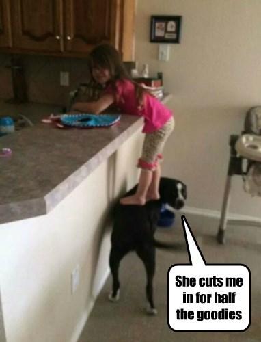 dogs,kids,heist