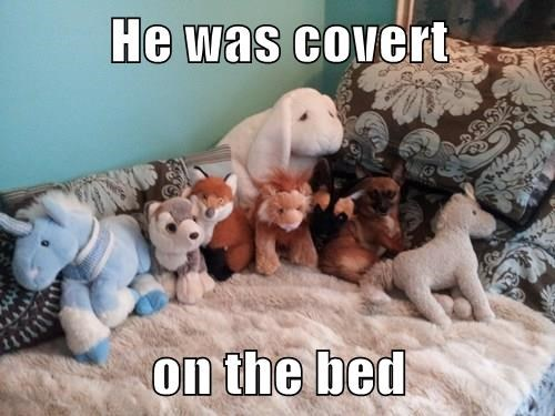 dogs hiding sneaky - 8323174912
