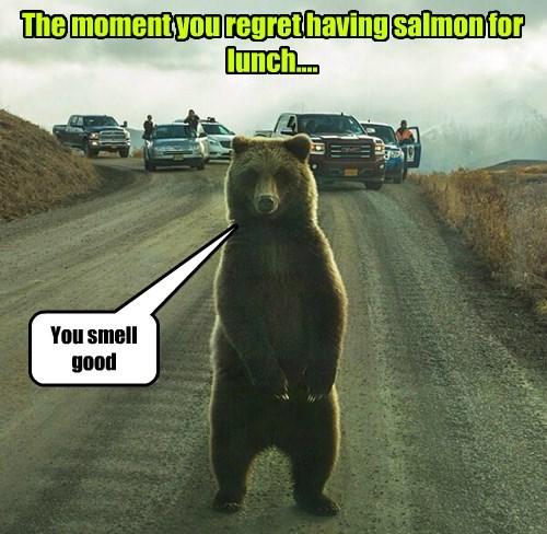 bears lunch salmon