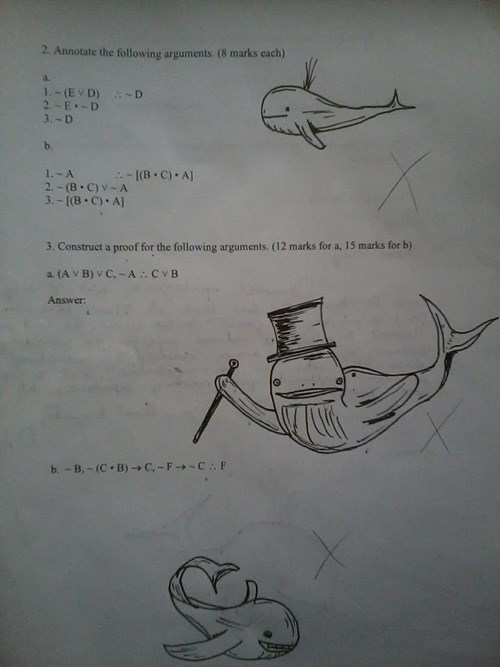 answer,whale,test