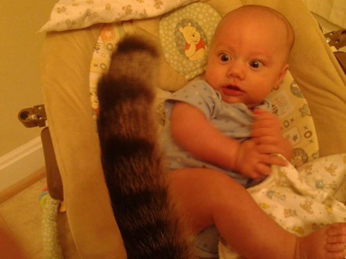 baby Cats expression tail parenting - 8323418112