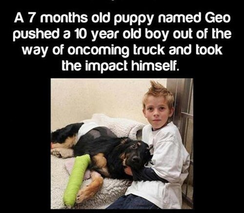 dogs,kids,hero