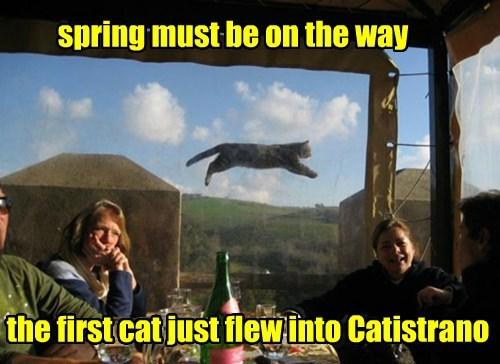 Cats,flying,spring