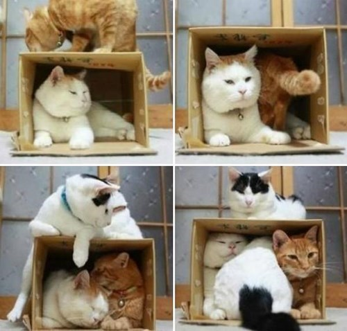 Cats magnets if i fits i sits - 8324075008