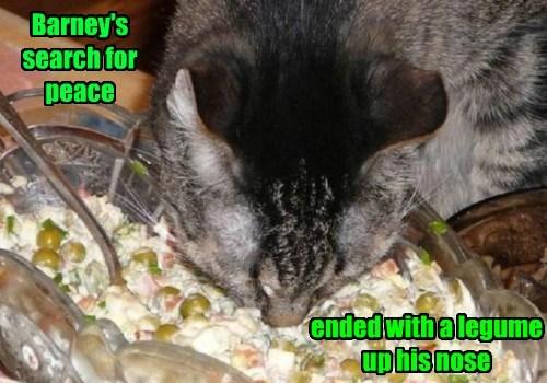 Cheezburger Image 8324140288